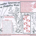 Grasses Placemat
