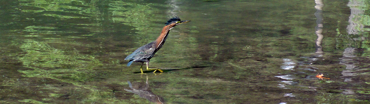 Magothy River Wildlife