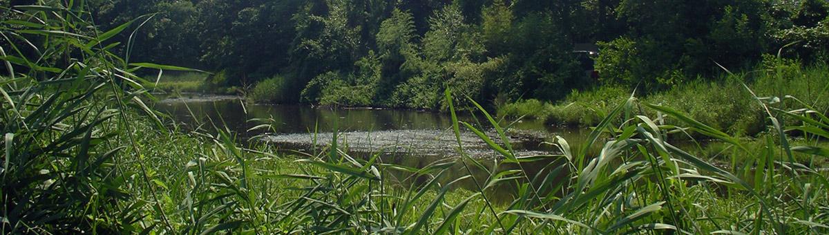 Magothy River Cyress Creek Wetlands